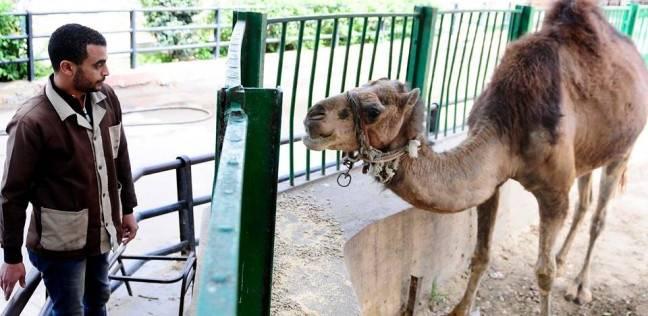 أفراد أمن لحماية الحيوانات.. حديقة حيوان الإسكندرية تستعد لشم النسيم