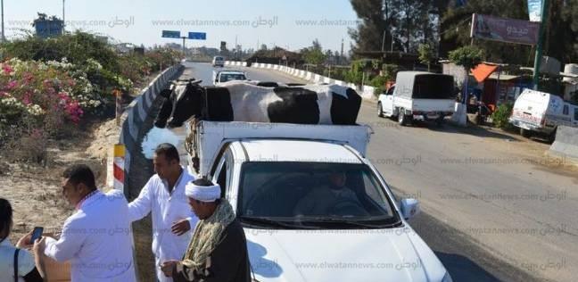 سقوط ضابط الشرطة «حرامى المواشى» بالعياط