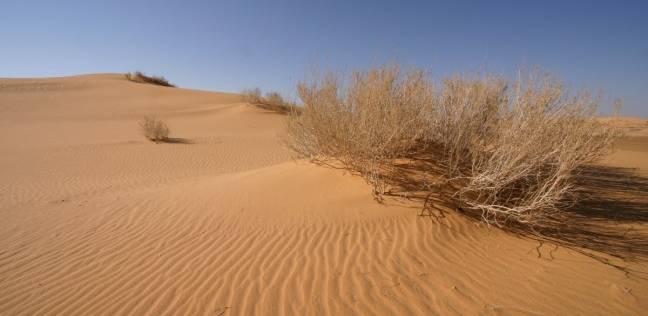 أمن أسوان ينقذ 4 أشخاص ضلوا الطريق في الصحراء جنوب المحافظة