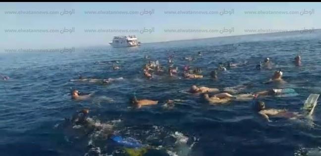 السائحين في الغردقة يداعبون القرش الحوتي