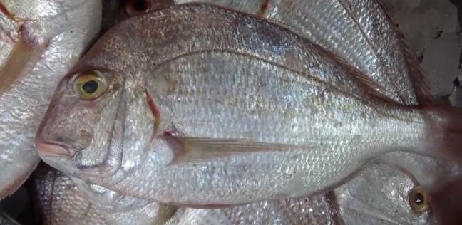 استقرار أسعار السمك في سوق الجملة.. والبلطي بـ22 جنيها