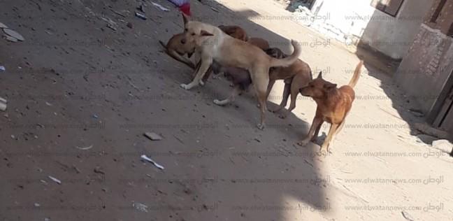 دعوى قضائية بإلزام الحكومة بوقف قتل كلاب وقطط الشوارع وتصدير لحومها