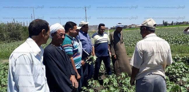 """""""الإرشاد الزراعي"""" بالبحيرة ينظم ندوات لمزارعي القطن"""