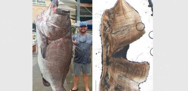 العثور على سمكة هامور