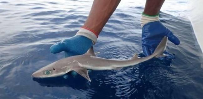 باحثون يكتشفون نوع جديد من أسماك القرش