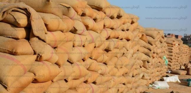 موسم «توريد القمح».. «التموين» تحدد 685 جنيهاً للأردب