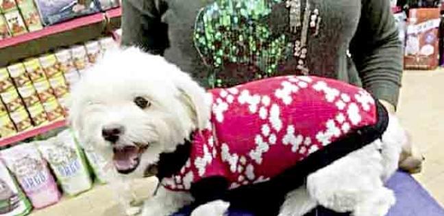 ملابس عصرية للقطط والكلاب