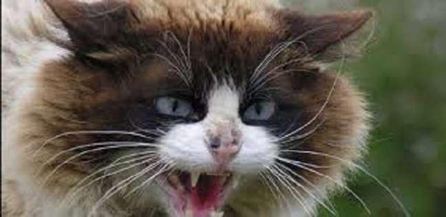 بالفيديو| فعلا غدارة.. قطة تهاجم رجل وتتسبب في نقله إلى المستشفى