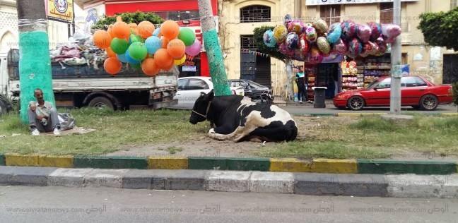 بالصور| أهالي بورسعيد يخالفون تعليمات المحافظ ويذبحون بالشوارع: عادة