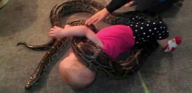 طفلة تلعب مع ثعبان