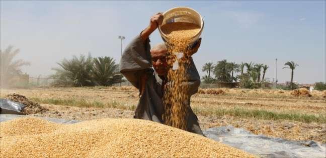 «الكسب» يحفظ التحقيق مع متهم بـ«فساد القمح» بعد سداده 92 مليون جنيه