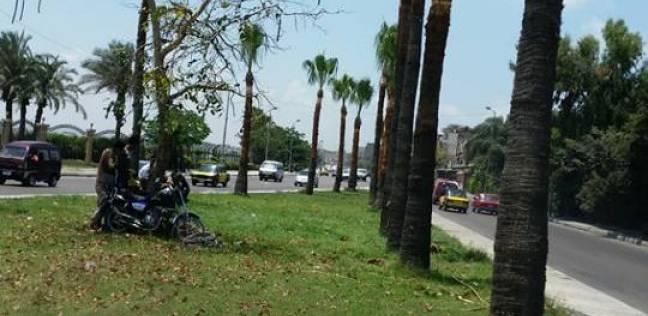حي شرق بالإسكندرية يقلم أشجار منطقة المطار