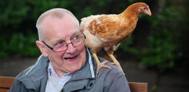 """""""بيوت الدجاجة"""".. أغرب طرق علاج اكتئاب كبار السن"""