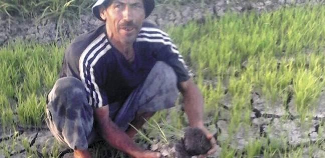 """""""الري"""": حسم 348 شكوى لمواطنين و282 لـ""""النواب"""" حول نقص مياه الترع"""