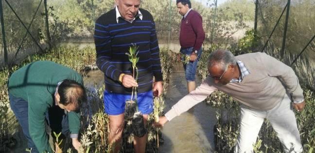 """رئيس """"الإرشاد الزراعي"""" يطالب بالتوسع في زراعة غابات """"المانجروف"""""""