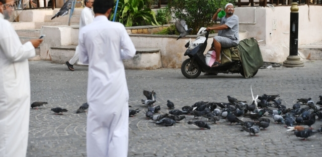ضبط سعودى عذب القطط بالكلاب في المدينة المنورة للتحقيق معه