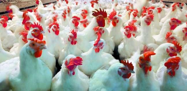 إطلاق لجان لمكافحة انفلونزا الطيور استعدادا للشتاء في الجيزة