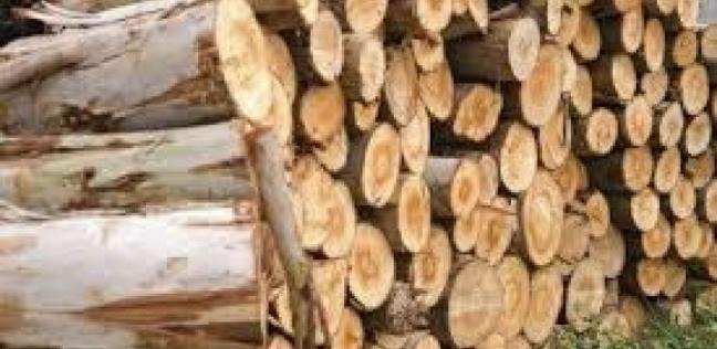 عن طريق الخشب.. شركة تتوصل لحل مشكلة تلوث البلاستيك
