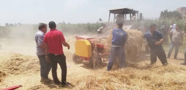 حصاد 171 ألف فدان أرز وذرة في كفر الشيخ