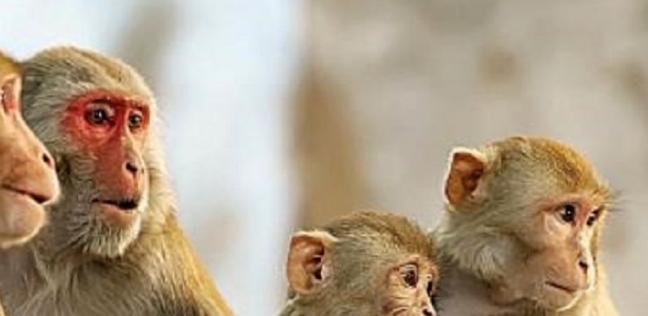 بعد تفشيه في بريطانيا .. تعرف على أعراض فيروس جدري القرود : ملوش علاج
