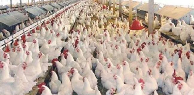 """تحصين 5420 حالة ضد """"أنفلونزا الطيور"""" في جنوب سيناء"""