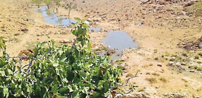 المجارى تدمر مزارع مطروح.. وتطرد أهالى 5 قرى بالمنوفية