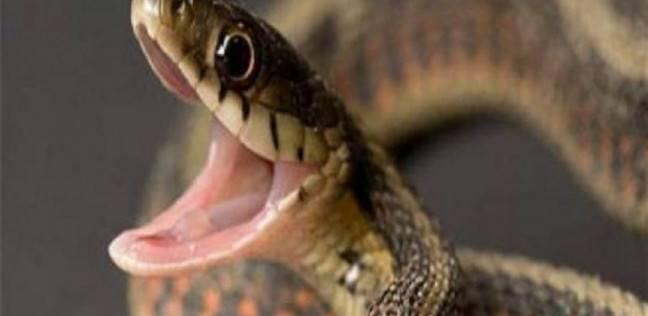 علماء يفشلون في العثور على متطوعين يخافون من الثعابين في سويسرا