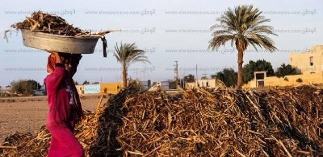 """""""الوزراء"""" يوافق على تأجير مصنع تدوير المخلفات الزراعية بمدينة الخارجة"""
