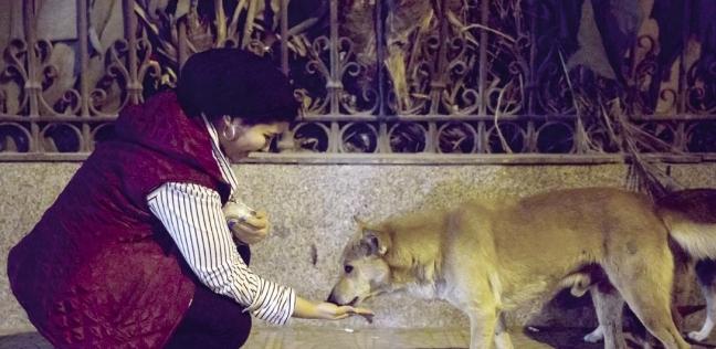حملات ميدانية لإطعام وتدفئة الحيوانات الضالة