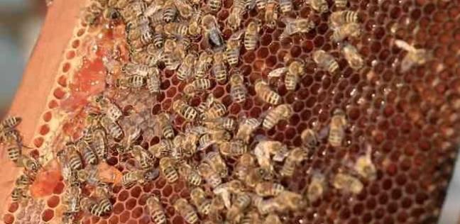 """ينجو من الموت بمعجزة بعد تعرضه لهجوم """"النحل القاتل"""""""