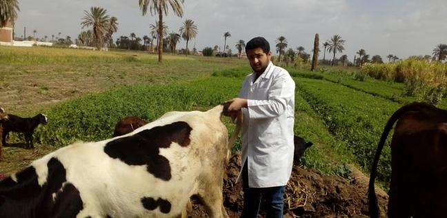 تحصين 520 ألف رأس ماشية في الدقهلية