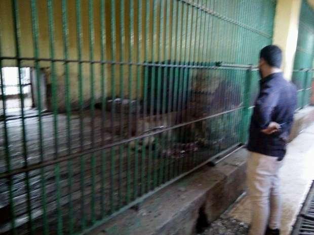 حديقة حيوان بني سويف: لم نطلق أسماء على الحيوانات الجديدة
