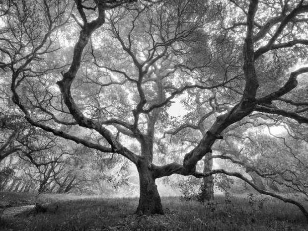 بالصور| المناظر الطبيعية تخطف الأضواء في مسابقة أمريكية للتصوير