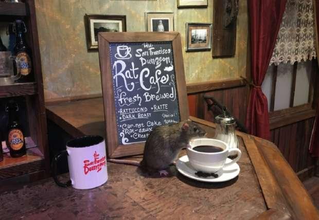 بالصور| مقهى للفئران في سان فرانسيسكو.. 50 دولار مقابل كوب القهوة