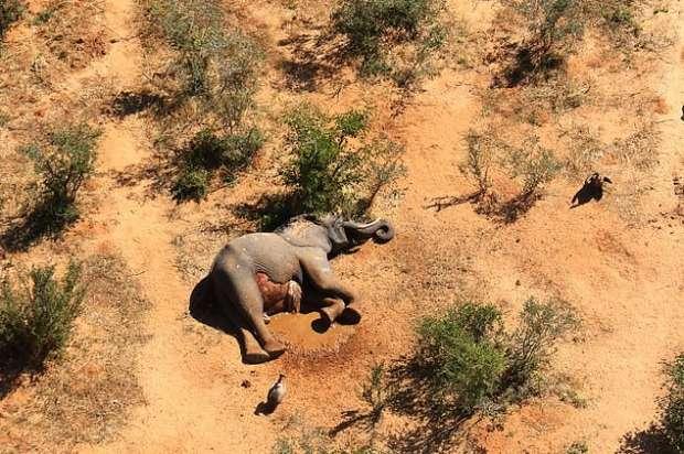 18615532501593621544 - كارثة غامضة.. نفوق مئات الأفيال في بتسوانا حول آبار المياه (صور مؤلمة)