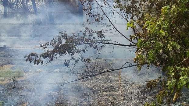 بالصور| اندلاع حريق في أشجار وأخشاب بمنطقة الخزان في نجع حمادي