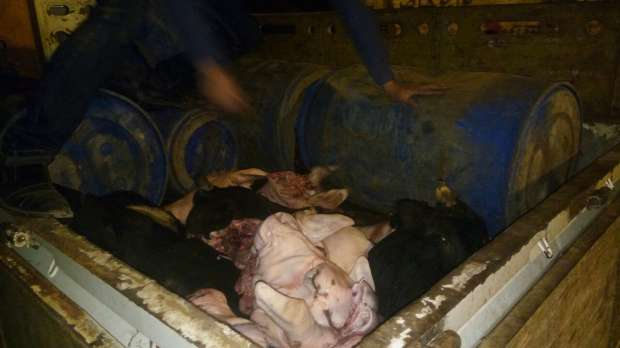 ضبط سيارة محملة بـ50 رأس لحوم أبقار وجاموس فاسدة بالفيوم