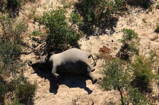 5322142721593621533 - كارثة غامضة.. نفوق مئات الأفيال في بتسوانا حول آبار المياه (صور مؤلمة)