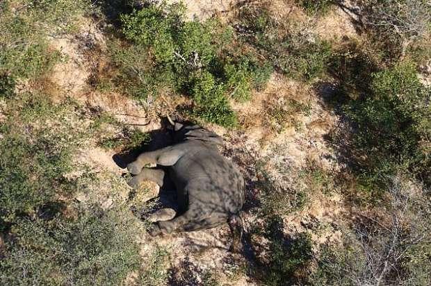 5745489621593621547 - كارثة غامضة.. نفوق مئات الأفيال في بتسوانا حول آبار المياه (صور مؤلمة)