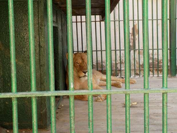 بالصور| حديقة الحيوان بالفيوم تستقبل 5 آلاف زائر في أول أيام العيد
