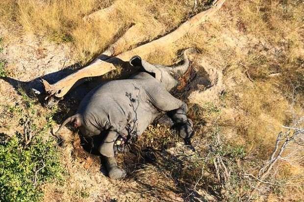 7429254251593621551 - كارثة غامضة.. نفوق مئات الأفيال في بتسوانا حول آبار المياه (صور مؤلمة)