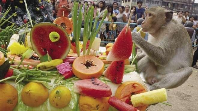 نتيجة بحث الصور عن مهرجان «بوفيه القرود» السنوي بتايلاند
