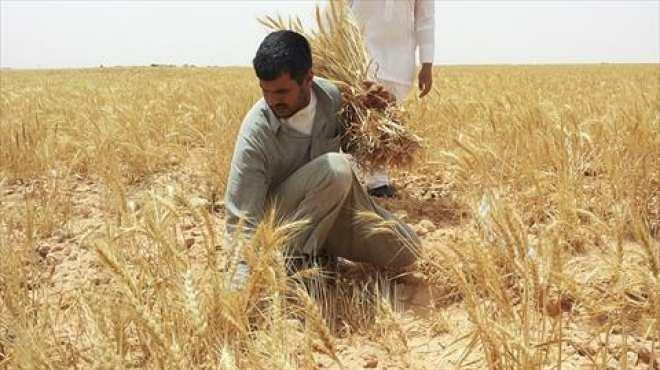 ندوة إرشادية زراعية حول الطرق الحديثة لزراعة القمح بسوهاج