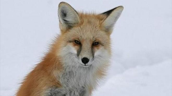 10 معلومات غريبة عن عالم الحيوان