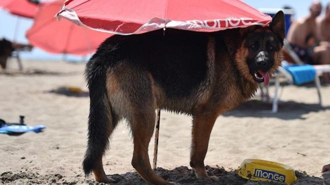 بلدية رأس الجبل تمنع اصطحاب الحيوانات والكلاب إلى الشواطئ وتهدد بحجزها وتصفيتها حفاظا على سلامة المصطافين