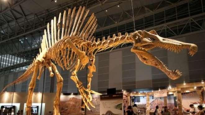 اكتشاف حفريات كائن يفترس الديناصورات في شمال إفريقيا