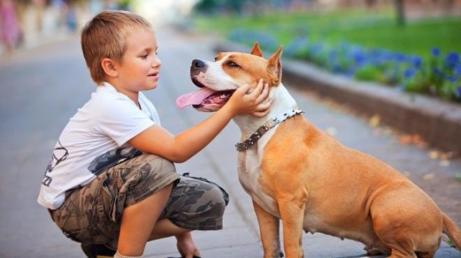 8 نصائح للأم قبل شراء حيوان أليف للطفل