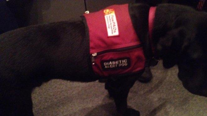 الكلب المعجزة.. يشخص انخفاض مستوى السكر بالدم