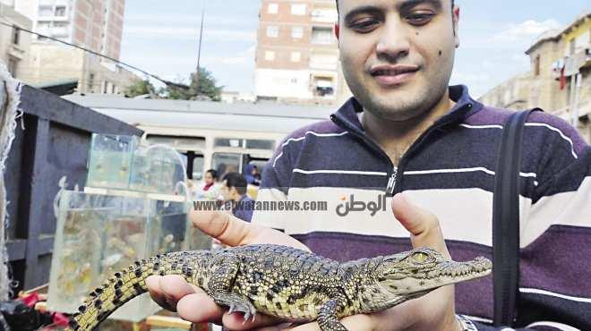 سوق حيوانات مفترسة فى كرموز: الصقر بـ 200 جنيه والتمساح بـ250