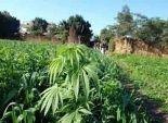 وكيل وزارة الزراعة بكفرالشيخ: نستعد للتعاقد مع المزارعين لتسويق القمح